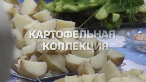 Проект «Заповедник»: Картофельная коллекция