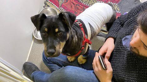 Пострадавший от живодера в Североморске щенок нашел дом