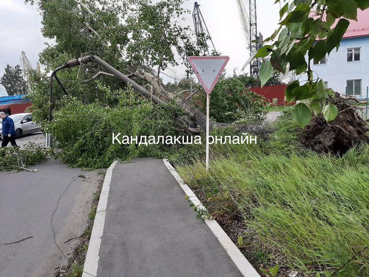 Ветер в Кандалакше вырывал деревья с корнями